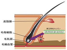 ジヒドロテストステロンを抑制